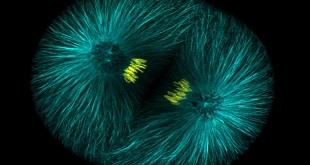 biology-pish1-test-[www.riazi100.ir]
