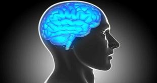 human-brain_650x400_51434640932